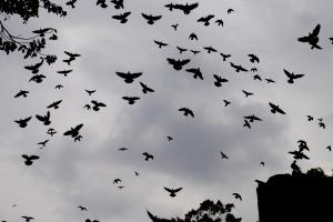 Birds_at_Sky